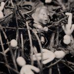ambrotipo exposição sorte revelada tiana chinelli